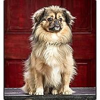 Adopt A Pet :: Gizmo - Owensboro, KY
