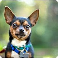 Adopt A Pet :: George-VIDEO!! - Sherman Oaks, CA