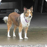 Adopt A Pet :: Sapphire (Adopted) - Pittsburgh, PA