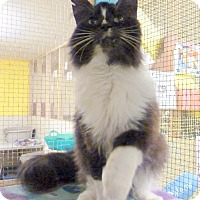 Adopt A Pet :: Prince - Westville, IN