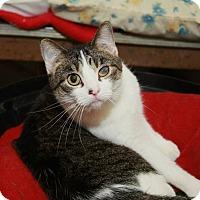 Adopt A Pet :: Kiko - Geneseo, IL