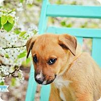 Adopt A Pet :: Hobart - Peachtree City, GA