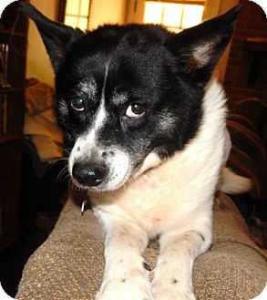 Border Collie Mix Dog for adoption in Anderson, South Carolina - McKENZIE