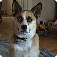 Adopt A Pet :: Lucy - Uxbridge, MA