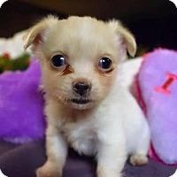 Adopt A Pet :: Truffle - Sacramento, CA