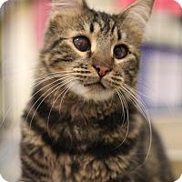 Adopt A Pet :: Woody - Sacramento, CA