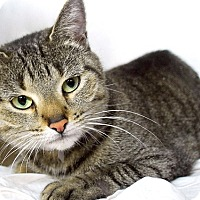Adopt A Pet :: Serena - Fairfield, CT