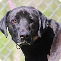 Adopt A Pet :: Colter (Has application) - Washington, DC