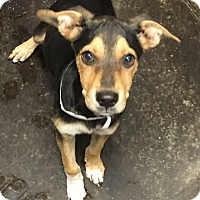 Adopt A Pet :: Aldo  (see his video) - Buffalo, NY