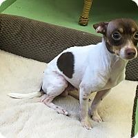 Adopt A Pet :: JakJak - Gadsden, AL