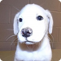 Adopt A Pet :: Trace - Oxford, MS