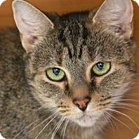 Adopt A Pet :: Sapphira - Gloucester, MA
