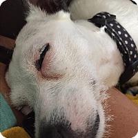 Adopt A Pet :: Jess - Albemarle, NC
