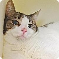 Adopt A Pet :: Violet - Salisbury, MA