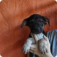 Adopt A Pet :: Junior - Oviedo, FL