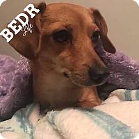 Adopt A Pet :: Chloe - Regina, SK
