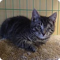 Adopt A Pet :: Colby - Island Park, NY