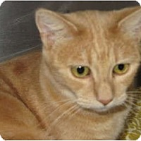 Adopt A Pet :: Sandy - Modesto, CA