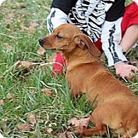 Adopt A Pet :: Zelda (Reduced) - Brattleboro, VT
