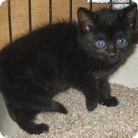 Adopt A Pet :: Big Bear - Dallas, TX