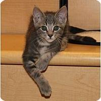 Adopt A Pet :: Max - Nolensville, TN