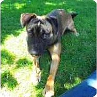 Adopt A Pet :: Savvy - San Francisco, CA