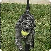 Adopt A Pet :: Quinn - Meridian, ID