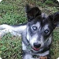 Adopt A Pet :: Chuy - Austin, TX