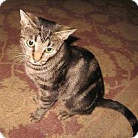 Adopt A Pet :: Jada - Colmar, PA