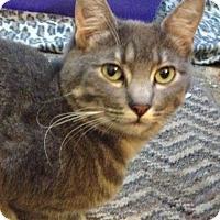Adopt A Pet :: Tiffany - Santa Rosa, CA