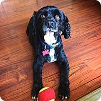 Adopt A Pet :: Charles - Sacramento, CA