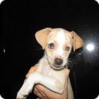 Adopt A Pet :: Dino - Rocky Mount, NC