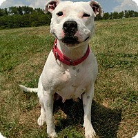 Adopt A Pet :: SOEY - New Manchester, WV