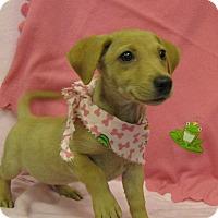 Adopt A Pet :: Celie - Charlemont, MA