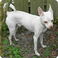 Adopt A Pet :: Liam - Umatilla, FL
