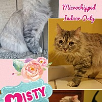 Adopt A Pet :: Misty - Madera, CA