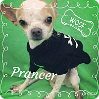 Adopt A Pet :: Prancer - Lake Elsinore, CA