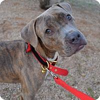 Adopt A Pet :: Vanabelle - Scottsdale, AZ