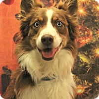 Adopt A Pet :: Frankie - Starkville, MS
