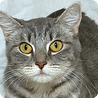 Adopt A Pet :: Stormy N - Sacramento, CA