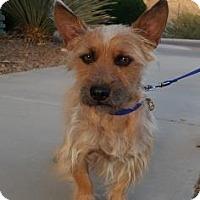 Adopt A Pet :: Henry - Tucson, AZ