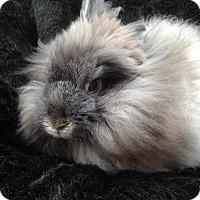 Adopt A Pet :: Emmett - Watauga, TX