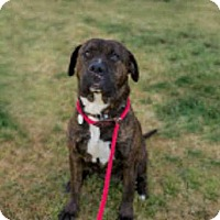 Adopt A Pet :: *MIA - Upper Marlboro, MD