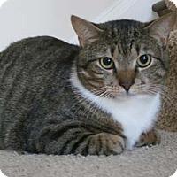 Adopt A Pet :: Max - Merrifield, VA