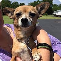 Adopt A Pet :: Mabel - Wyanet, IL