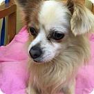 Adopt A Pet :: Tiny