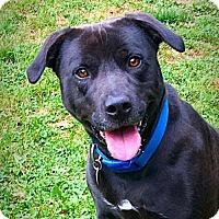 Adopt A Pet :: Mya - West Des Moines, IA