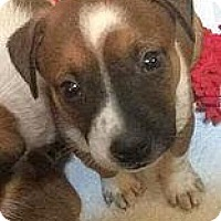 Adopt A Pet :: Mr. Walton - Racine, WI