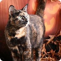 Adopt A Pet :: Giana - Pegram, TN