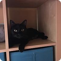 Adopt A Pet :: Sunshine - Livonia, MI